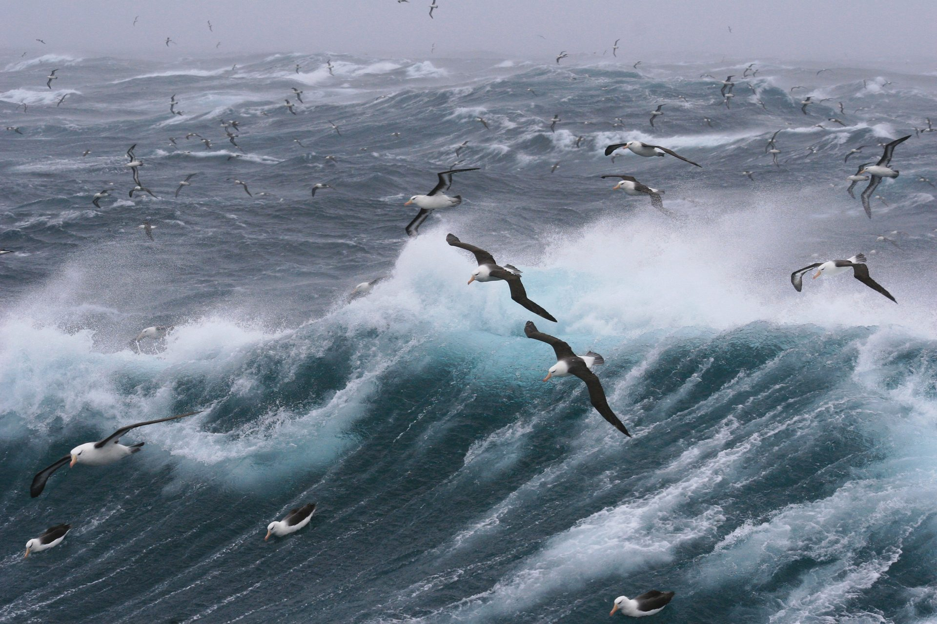 seal gulls flying over raging sea