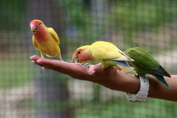 person holding birds in hand in Jamaica